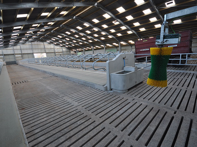 Surefoot Slip Resistant Gang Slats in New Dairy Unit